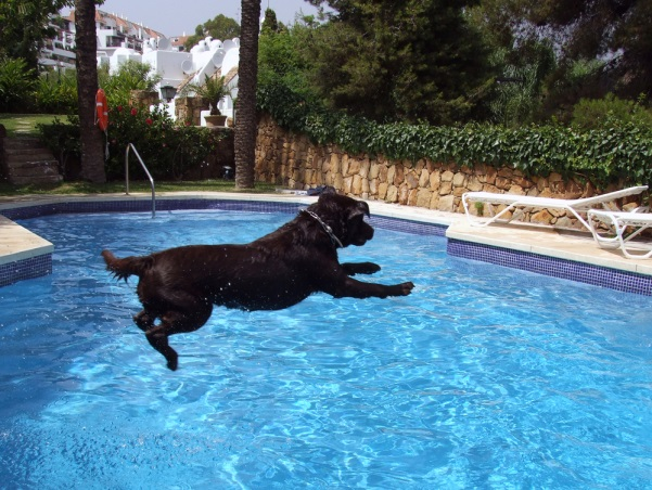 Dog Days of Summer - Swim for MS
